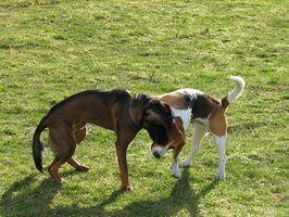 Cheiros que repelir cães