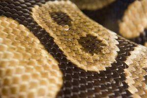Snakes no sul da louisiana