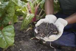 Substitutos para farinha de ossos para plantas
