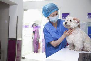 Os sintomas de um nervo comprimido na coluna vertebral de um cão