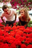 Flores vermelhas e seus nomes