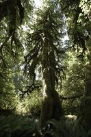 Atividades floresta temperada