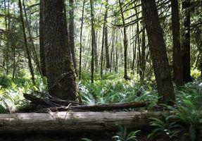 Florestas temperadas e os tipos de solo