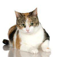 O peso médio dos gatos malhados feminino