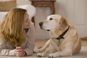 Os melhores cães para mulheres solteiras