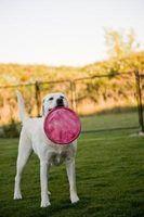Os melhores cercas para cães de grande porte