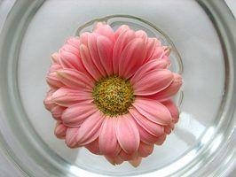 As melhores flores para uma peça central flutuante