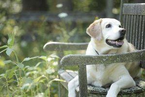A melhor paisagismo para um quintal com cães