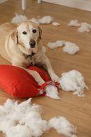 A melhor roupa de cama animal de estimação para um cão que destrói coisas
