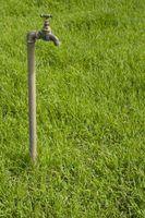 O melhor adubo e controle de plantas daninhas pet gramado segura