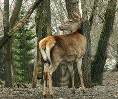 Os melhores lugares para caçar cervos em michigan