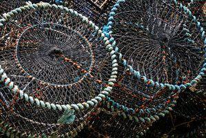 Os melhores lugares para colocar redes de caranguejo ao longo do rio hudson