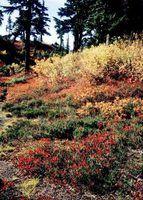 Uma lista de arbustos verdes anão