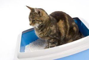Os melhores caixas de areia para gatos de auto-limpeza