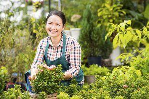 Os melhores pequenas empresas para começar em uma cidade rural