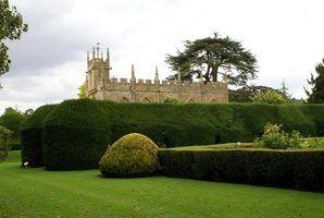 Os melhores árvores e arbustos para um hedge de privacidade