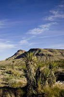Recursos renováveis do deserto