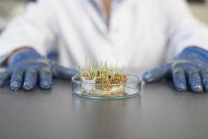 Desvantagens da engenharia genética em seres humanos