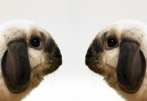 As vantagens de clonagem reprodutiva
