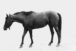 Os efeitos reações e laterais da reserpina medicamentos usados em cavalos