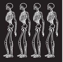 Quiroprático para programas osteopata