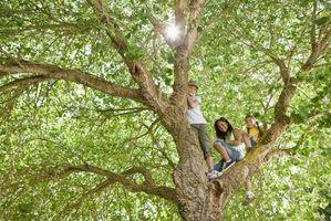 Os usos da árvore moringa