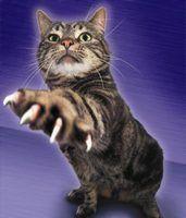 Dicas para uma tampa garra gato