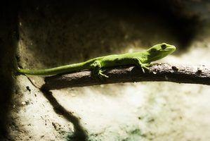 Produtos químicos tóxicos para lagartixas