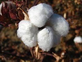 Nomes comerciais para o algodão