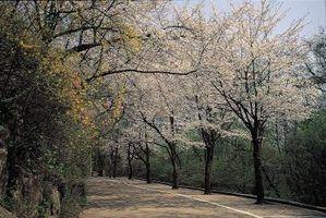 Árvores seguros para sistemas sépticos