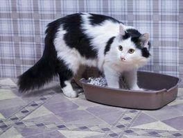 Truques para se livrar do cheiro de urina de gato