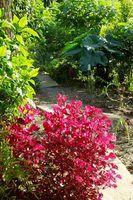 Plantas da floresta tropical e orquídeas