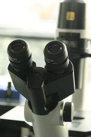 Tipos de microscópios 3d