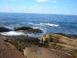 Tipos de caranguejos no oceano atlântico
