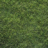 Tipos de grama em fresno
