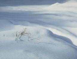 Tipos de graxa para um snowblower arianos