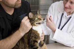 Assistente veterinário perguntas da entrevista da amostra
