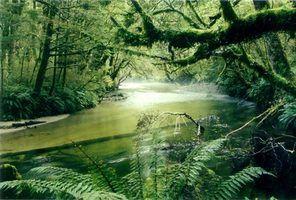 Animais da água na floresta tropical