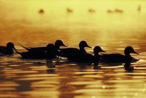 Quais são alicates de bico de pato?