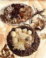 Quais são cogumelos porcini?