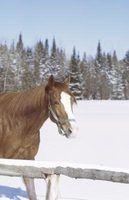 Quais são os 5 cores básicas casaco cavalo?