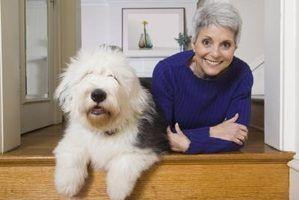 Quais são as causas de pêlo de cão branco que giram vermelho?