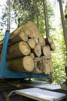 Quais são os deveres de um guarda florestal?