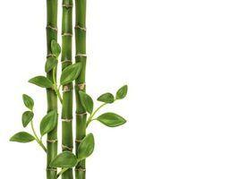 Quais são os significados das hastes de bambu da sorte?