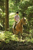 O que botas são melhores para cavalos pista de equitação?