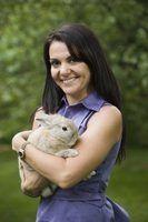 Que raça de coelhos fazem os melhores animais de estimação?