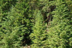 Que erros atacar e matar árvores verdes?