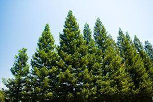 O que eu posso usar para remover a seiva da árvore de um rv?