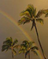 O que causa manchas marrons nas folhas de palmeira?