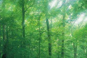 Quais as cores combinar com floresta verde?